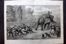 ILN 1880 LG Print. Military Amusements in Afghanistan, Tug og War with Elephant